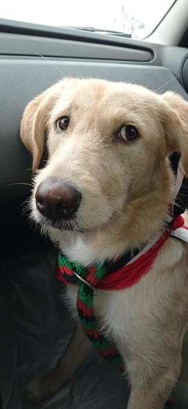 Atena. Hermosa cachorrita de 7 meses en adopción