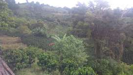 vendo finca de 6.5 hectáreas ubicada en el municipio de Gigante,tiene cafe nuevo y platano,casa y beneficiadero.