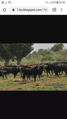 rural chacras