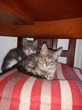 Dos gatitos en adopción