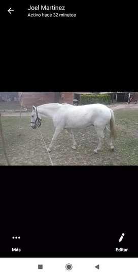 Vendo caballo de montado