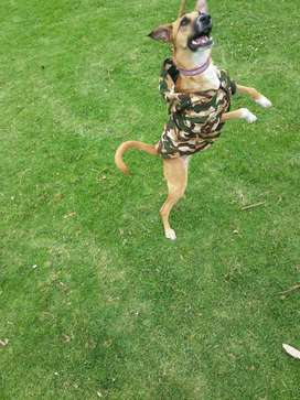 IMPERMEABLE CHALECO PARA PERROS