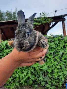 Conejos disponibles para mascota