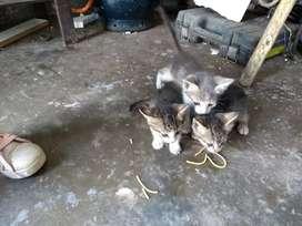 Se da en adopción tres gatitos