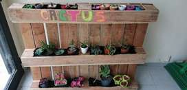 Ofertasde plantas