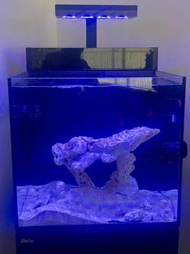 venta de acuario marino, con todos sus accesorios listo para iniciar con este hermoso hobbie.