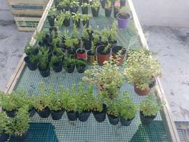 Vendo Plantines florales - aromáticos - tierra preparada - pasto.