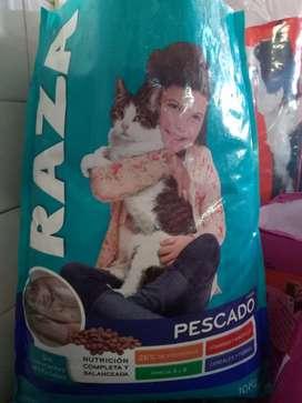 Gatos Raza- Sabrositos