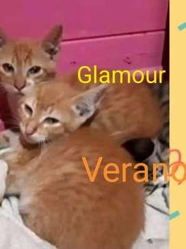Gatitos en adopcion se dan juntos y leer aviso