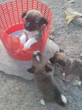 Cachorros mestizos
