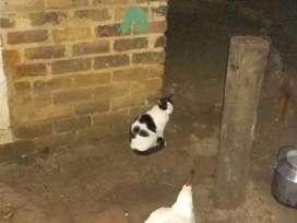 Venta de gatos    Envio gratis