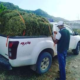 Venta Pacas alfalfa Guayaquil