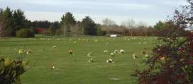 Parcela Cementerio Los Robles