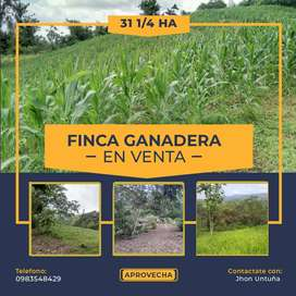 FINCA GANADERA 31 1/4 HECTAREAS