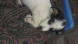Un perrito en adopción cerca del Alto Trujillo