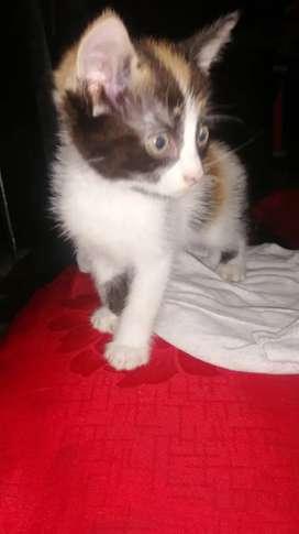 Adopcion gatos bebes