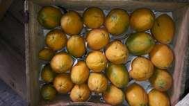 Papaya hawaiana
