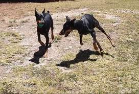 Guarderia canina por dias,semanas  etc30330