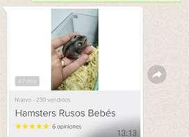Hámster ruso son chiquitos de tamaño