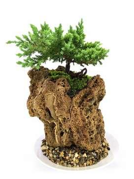 Bonsai en Piedra Fosil y Base en Porcelana Desde $99Mil