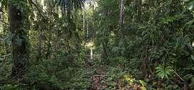 vendo fundo de 6 hectareas EN IQUITOS