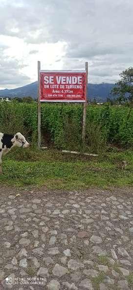 Se vende lindo terreno en Natabuela junto a la finca Santa Eulalia