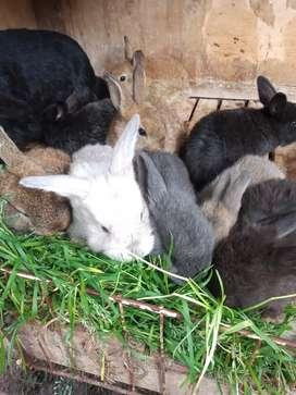 Conejos bebés