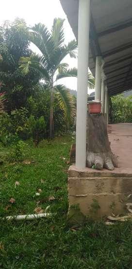 Venta finca de producción de cacao y plátano en Rionegro Santander, vereda la calichana.