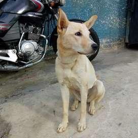 Hermosa perrita cachorra en adopcion Medellín