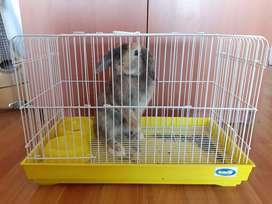Jaula para conejo