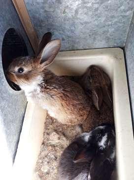 Últimos conejos !