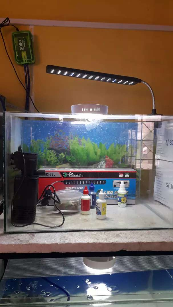 Acuario para peces