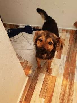 Doy en adopción dos perros criollos