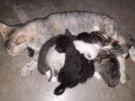 Busco familia para 3 Gatitos medianos