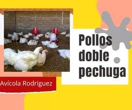Pollo doble pechuga - D'Corral