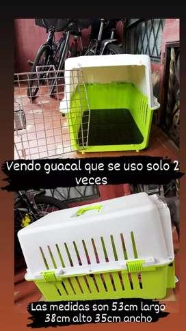 Guacal Para mascota