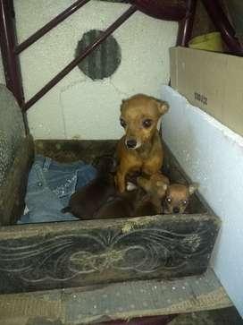 Venta perros