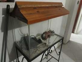 Pecera con Filtro,techo Y Decoración