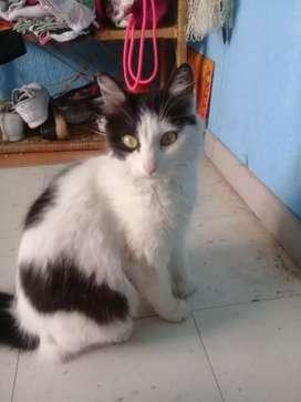 Gatica en adopcion