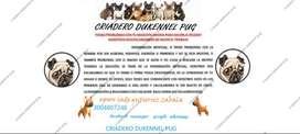 servicio de inseminación artificial en caninos