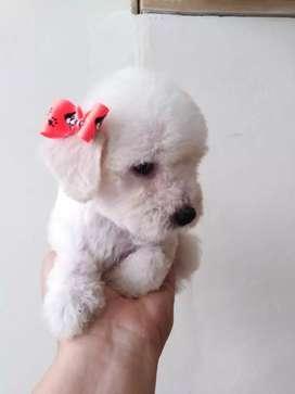 Hermosas mini toy