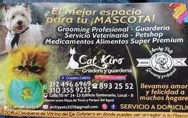Se vende hermosa tienda de mascotas con Peluquería Profesional para Gaticos y perros