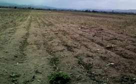 Venta de terreno para cultivo negociable