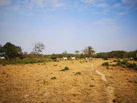 Cambio 11 hectáreas de tierra por casa en yopal