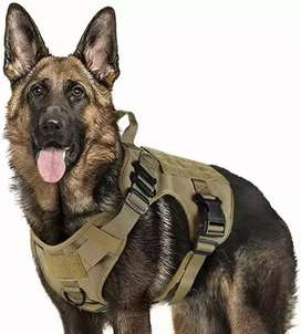 Pechera militar para perros, mascotas