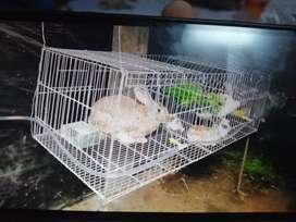 Venta de conejos y carne de conejo
