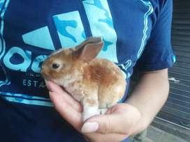 Hamster y conejos de raza mascota