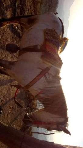 Vendo caballo para carga