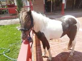 Pony barato