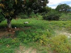 Venta de Parcela 1 Hectaria